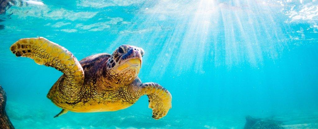 turtle_1024